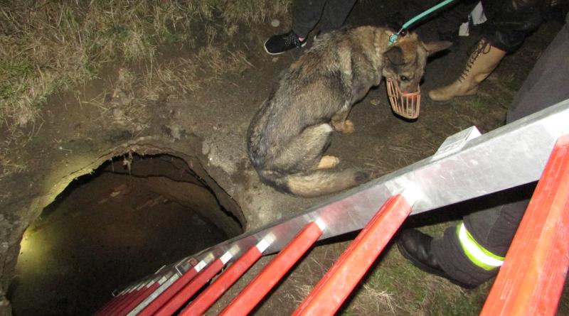 A monori tűzoltók mentettek meg egy kutyát a haláltól