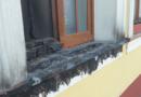 Tűz ütött ki a felújított kormányablaknál
